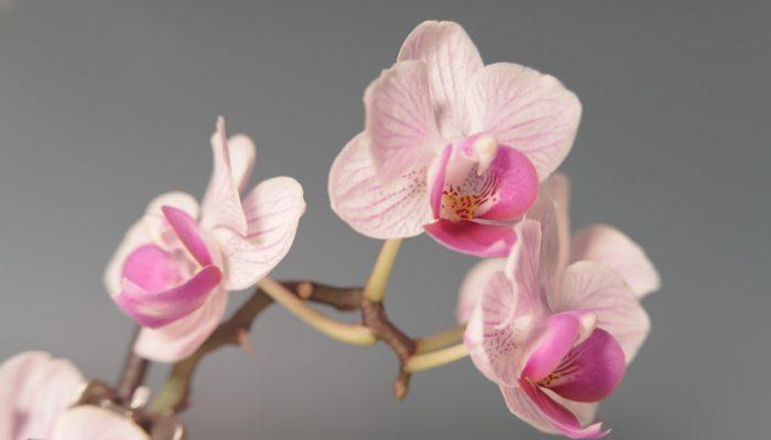 Centros de flores con encanto para decorar tu casa en venta o alquiler